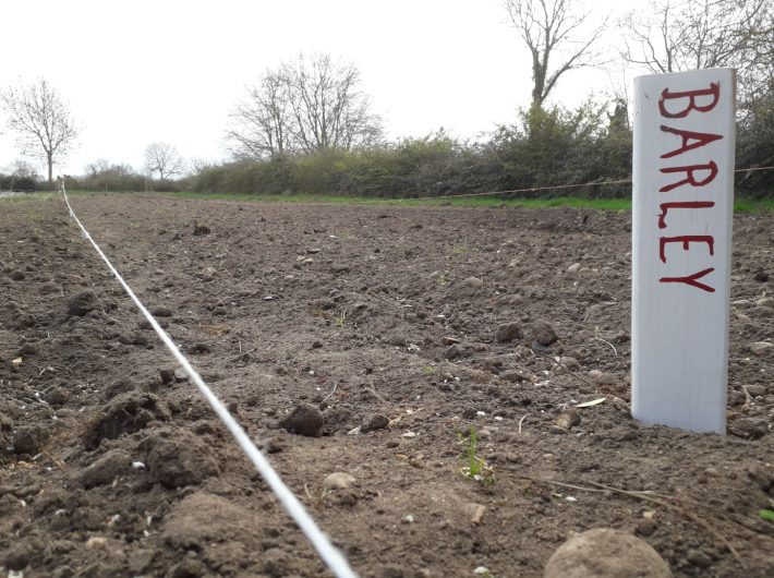 Plot at Old Hall with Barley crops just beginning to germinate
