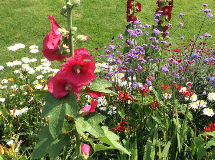 Many summer plants in the garden border