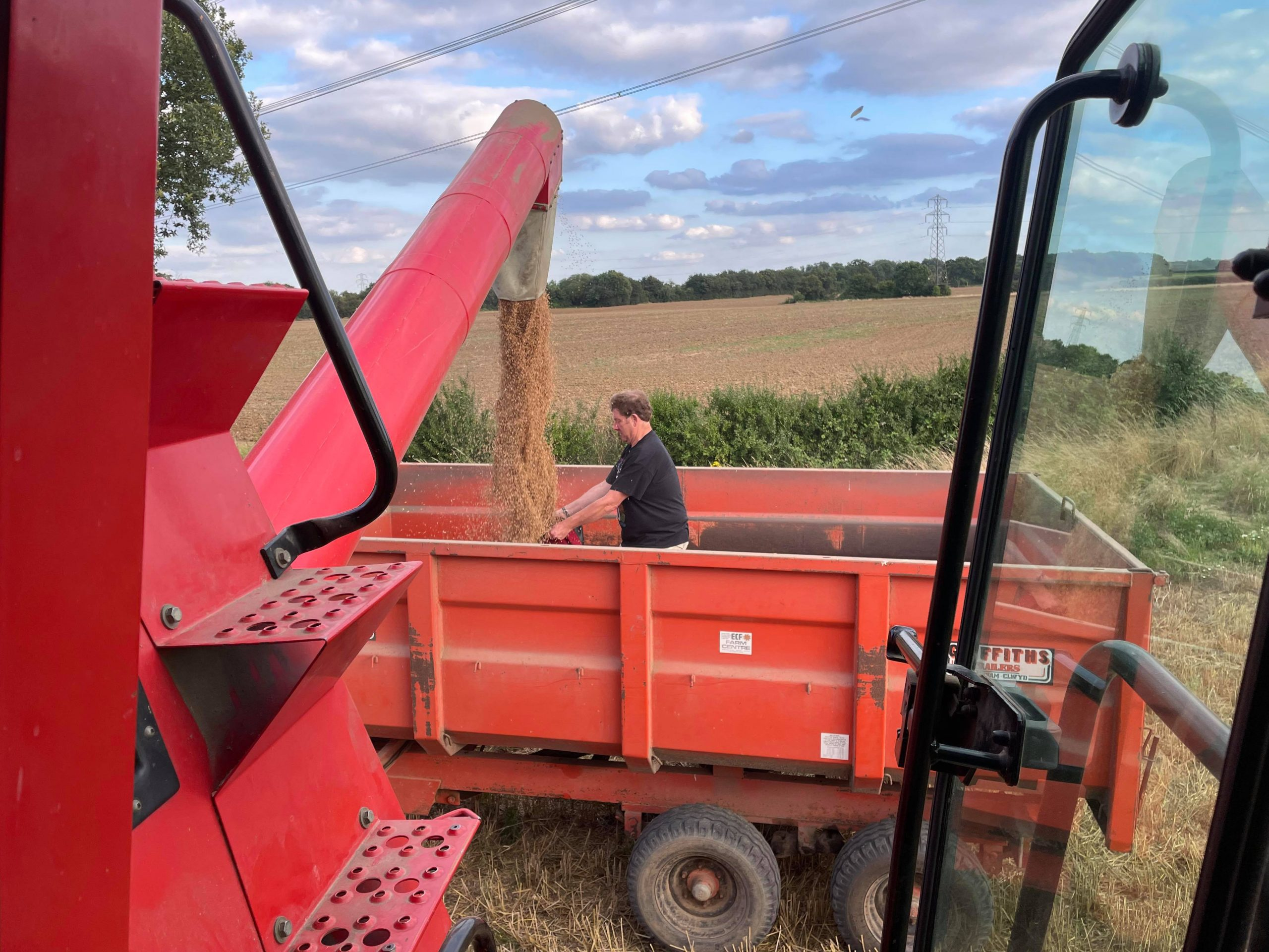 Tim Nash standing in a tractor trailer catching wheat from a combine harvester in his bicycle panier.
